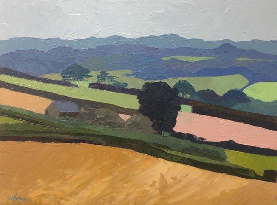 Llawhaden Fields
