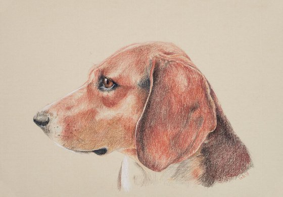 Red Pointer/Hound Dog on Sand-Coloured Paper