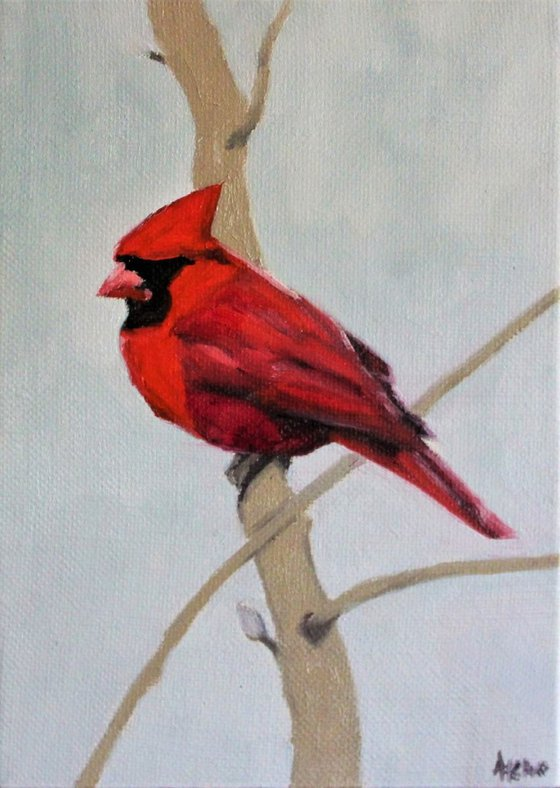 Song birds - Cardinal