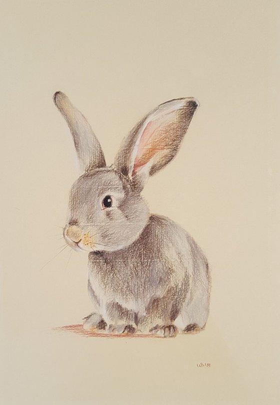 Baby Grey Rabbit