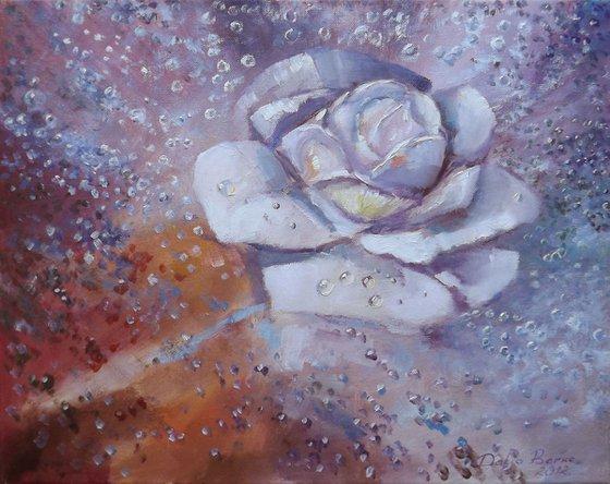 Rain Melody (Rose)