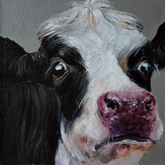 Curious Cow_Gia