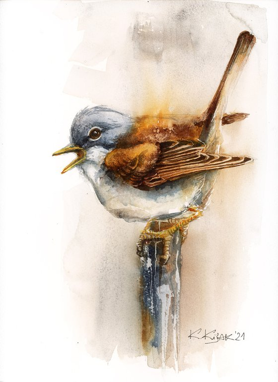 Common whitethroat, watercolor of birds and wildlife