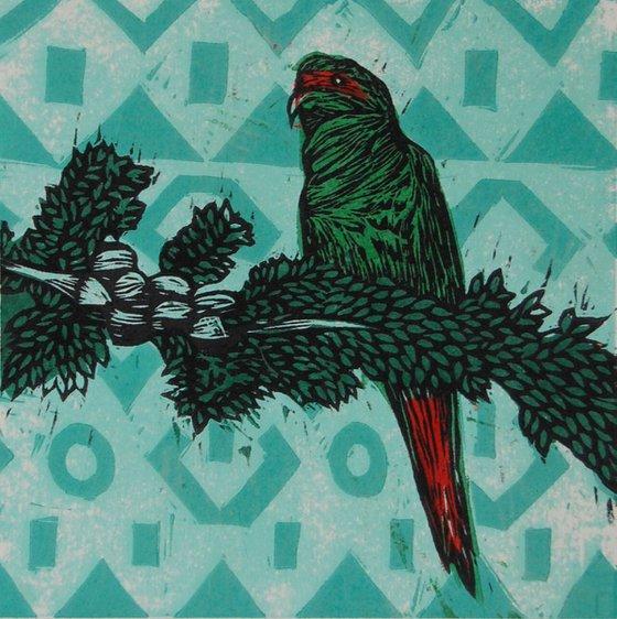Serie Pájaros Chilenos: Choroy