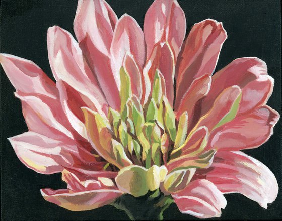 pink zinnia acrylic floral