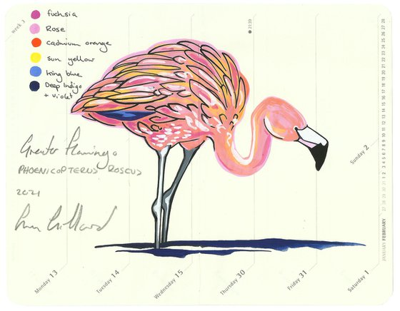 Birds of North America: Greater Flamingo