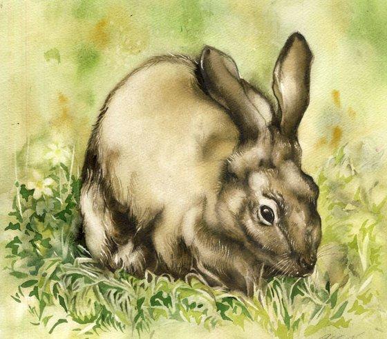 watercolor rabbit