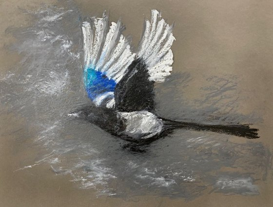 Magpie take off