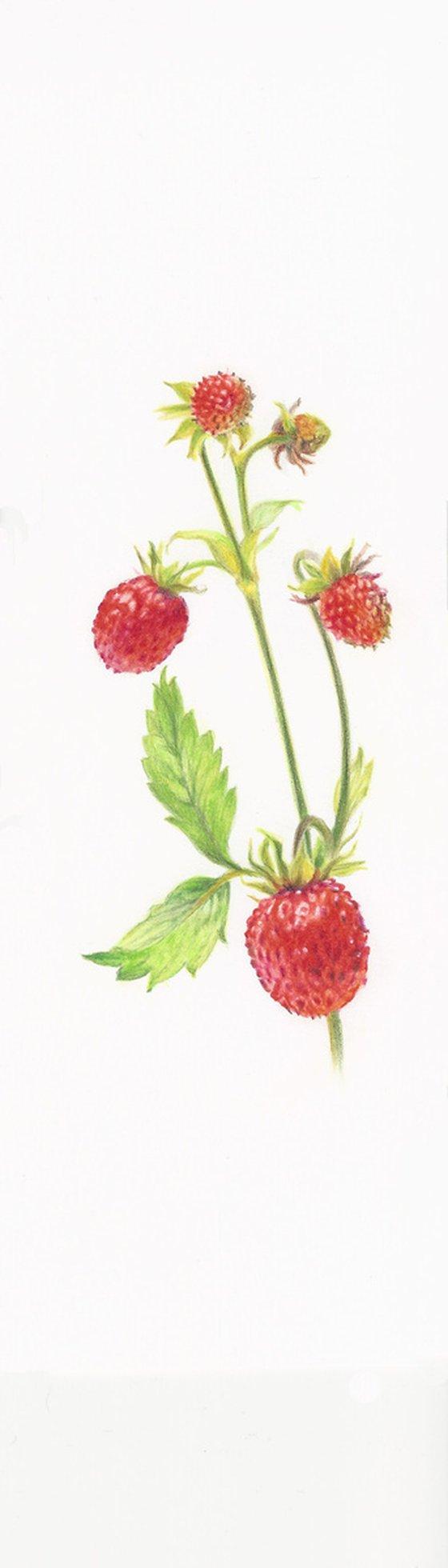 My Wild Berries as Bookmarks - The Wild Strawberries