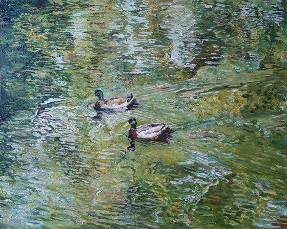Ducks (green study)