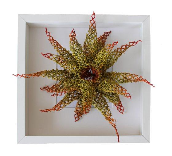 """Free Swimming Sea Lily"""