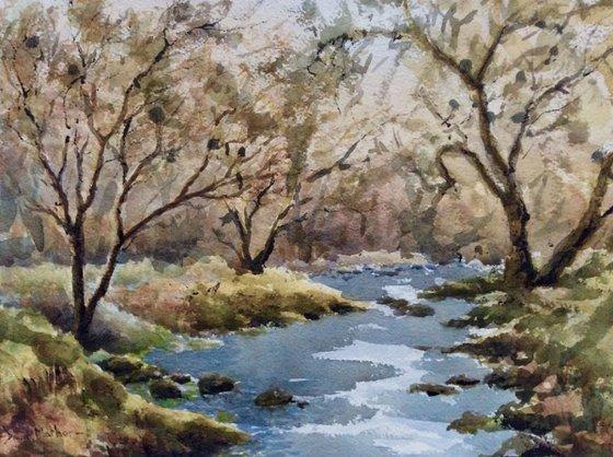 River Meavy Dartmoor