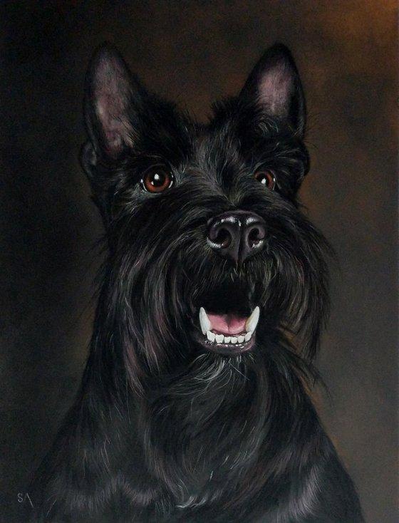 Scottish Highland Terrier l (Original Painting)