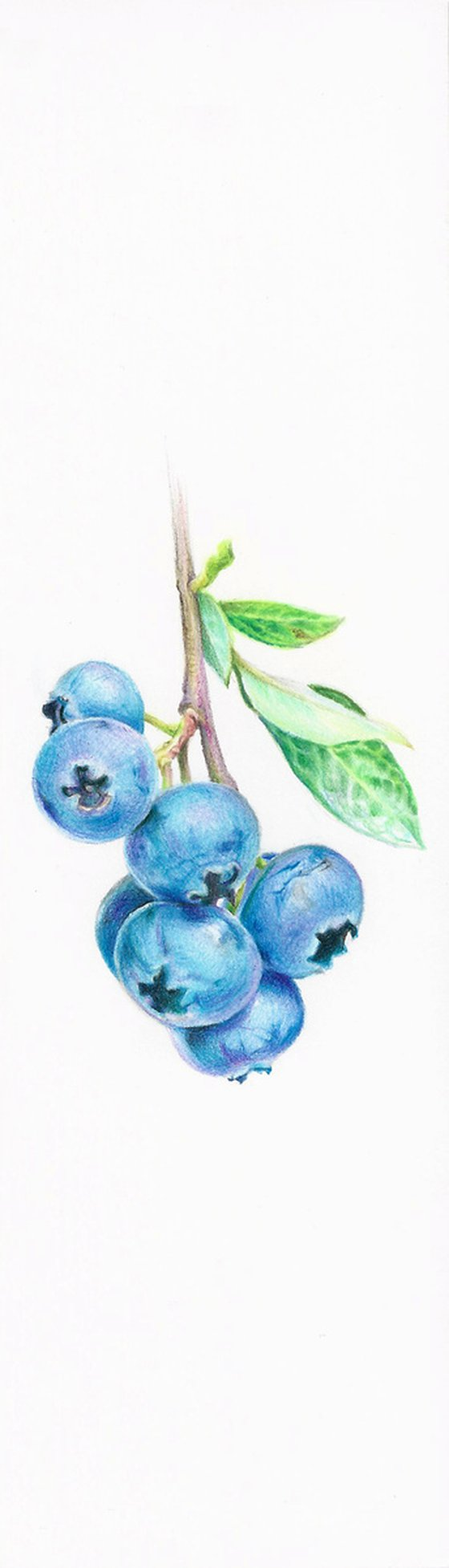 My Wild Berries as Bookmarks - The Blackcurrant