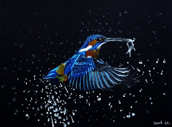 The kingfisher and the fish.