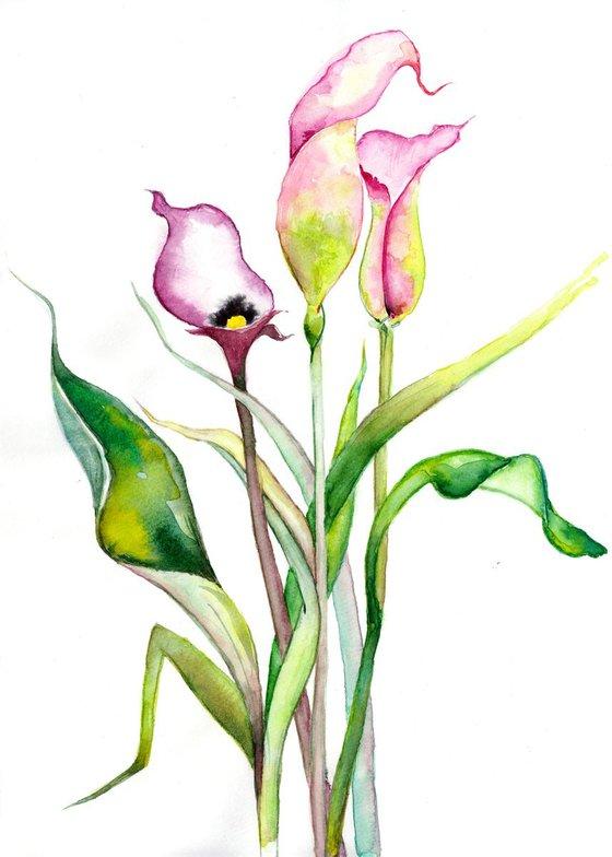 Flower V - Calla Lily