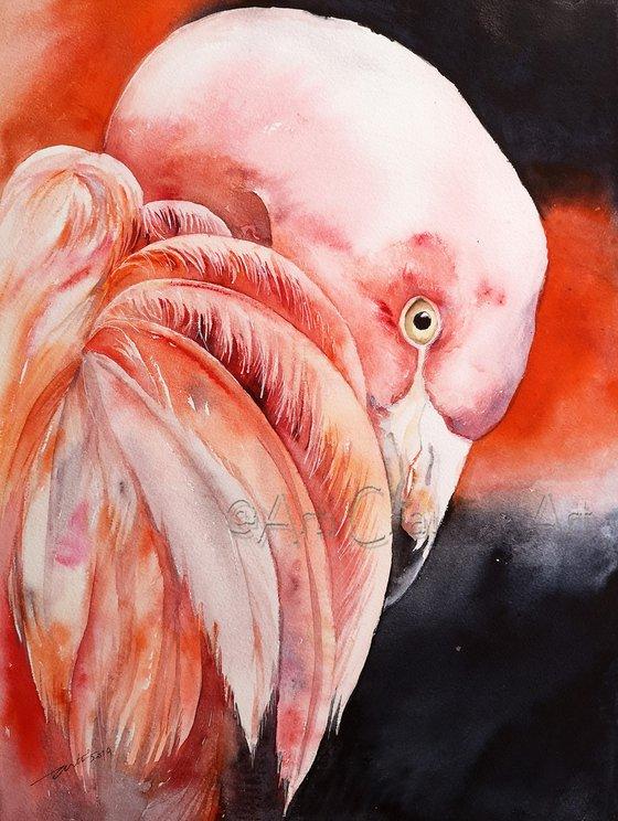 Finn the Flamingo