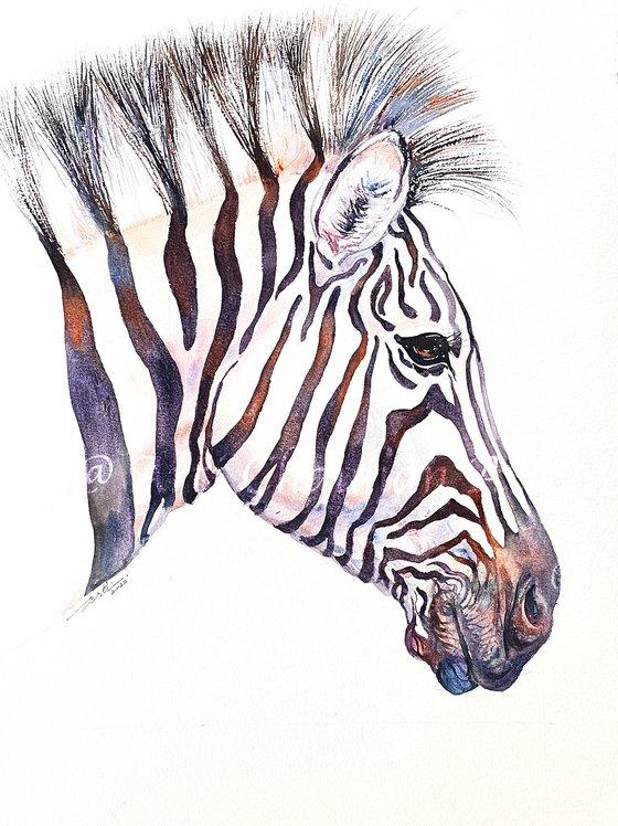 Moon Rock_Zebra