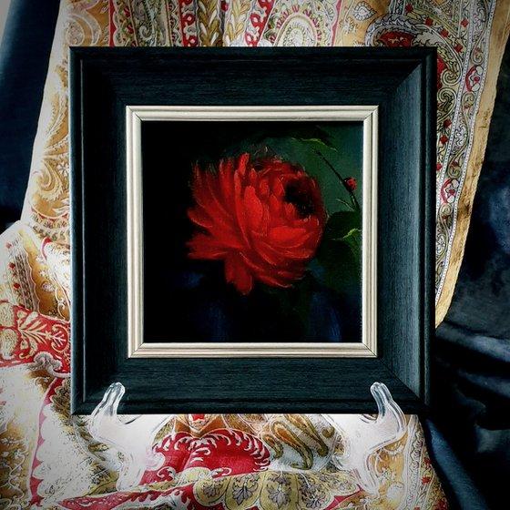 Genus Rosa, 'Fire Bug'