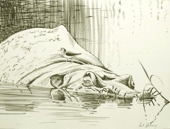 Common Sandpiper on the Hippo rock