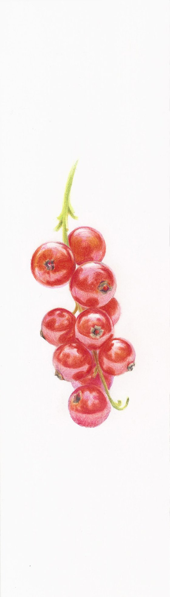 My Wild Berries as Bookmarks - The Red Currant