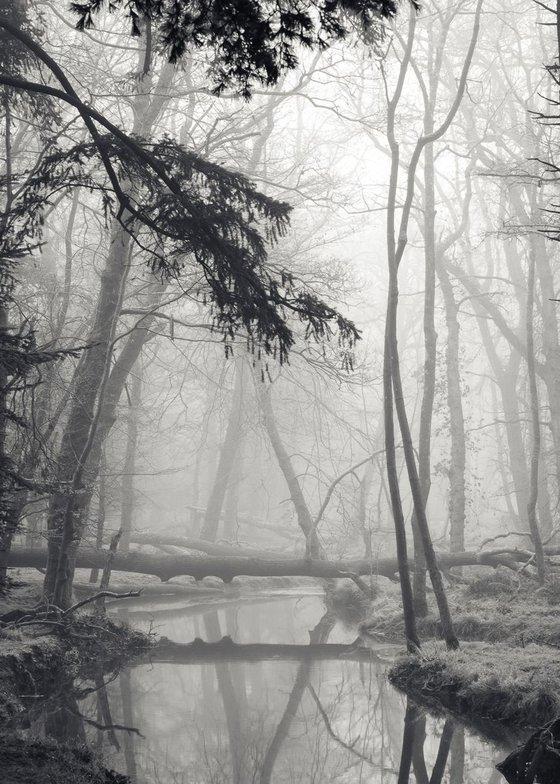 Giacometti trees