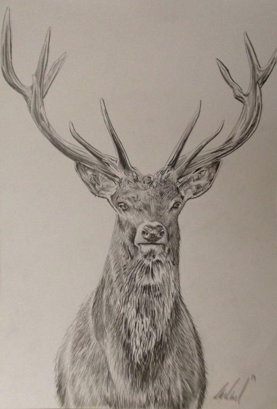 12 Pointed Deer