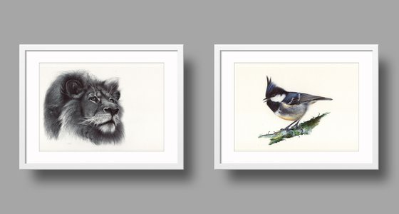 Set of 2 drawings, African Lion and Coal Tit