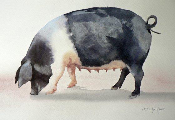 Watercolour Pig Painting - original British Saddleback Pig Painting