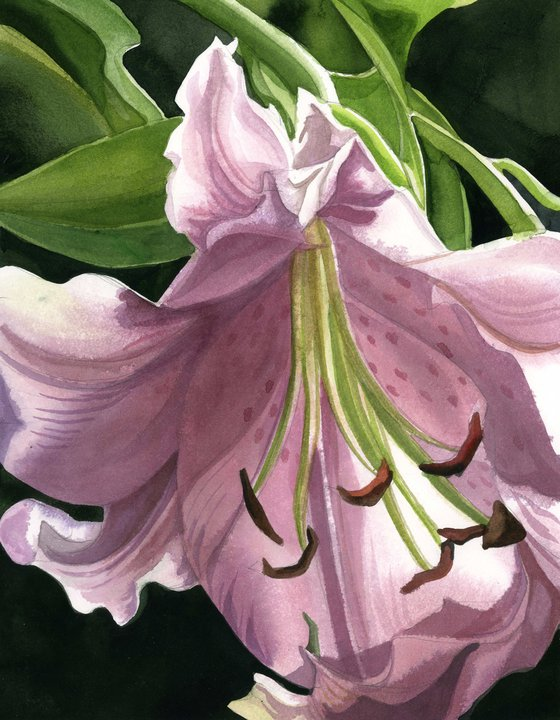 spring lily watercolor floral