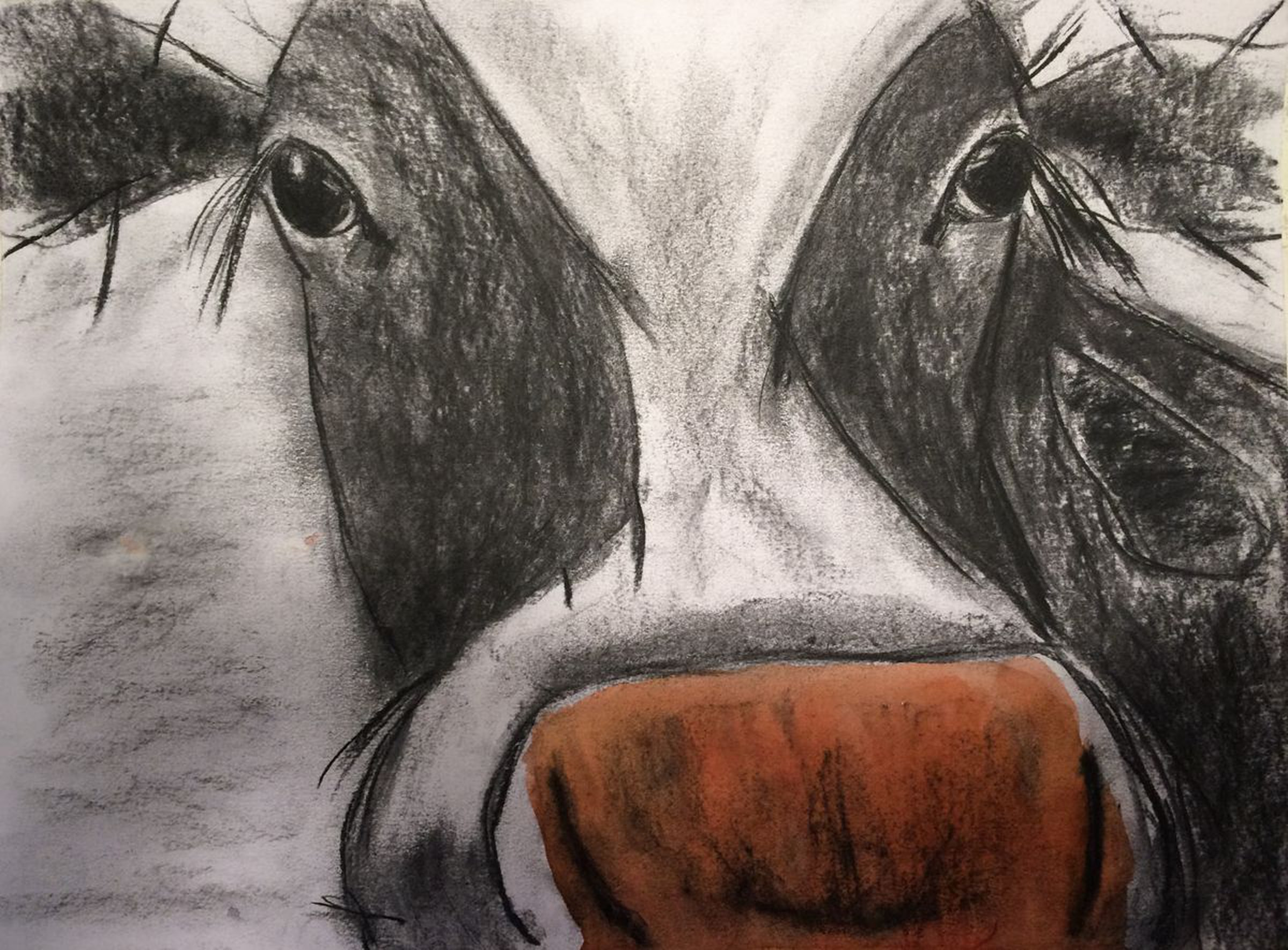 Cow Sketch in Charcoal