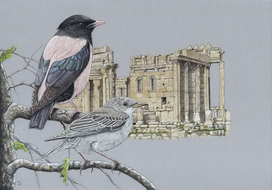 "Original pastel drawing bird ""Rosy starlings"""