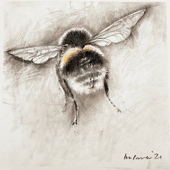 Bumblebee #04 charcoal drawing on paper - 210mm x 210mm