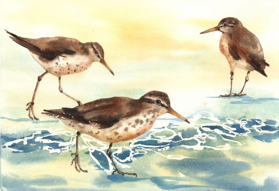 Sandpiper Surf - framed original watercolour