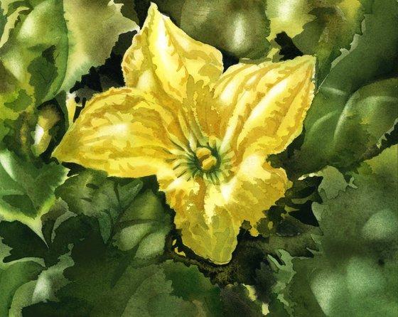 squash blossom watercolor floral