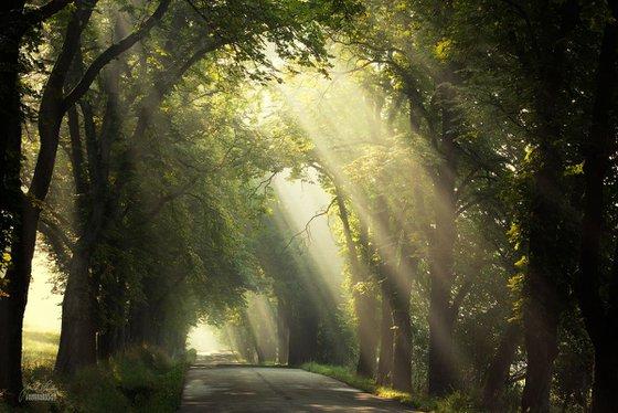 Morning poetry of light