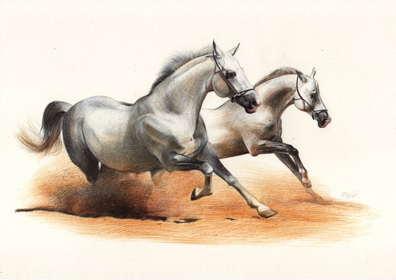 Two White Horses in the Dust