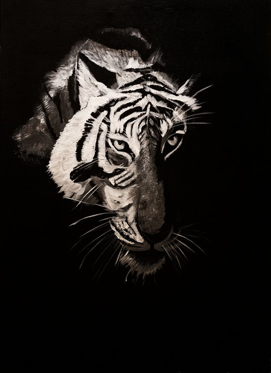 Tiger in the night