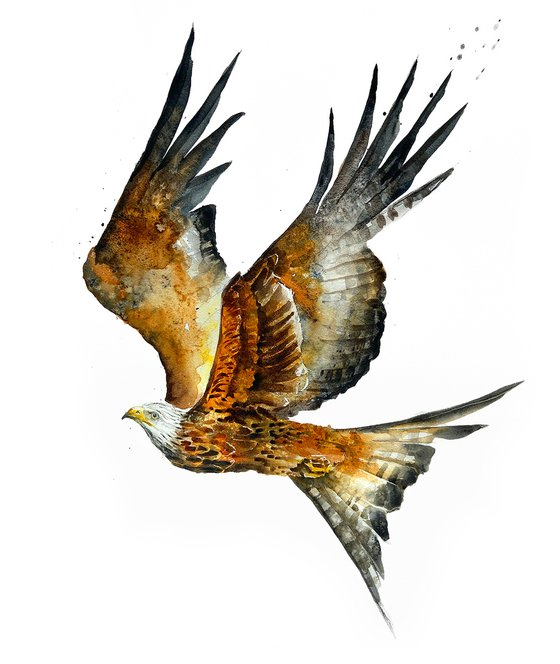 Red Kite, wildlife, birds watercolours