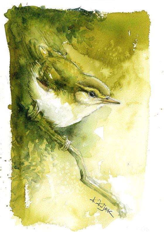 Willow warbler, wildlife, birds watercolours