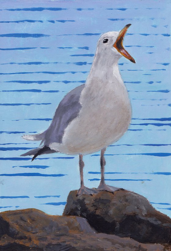 Noisy gull, St Ives