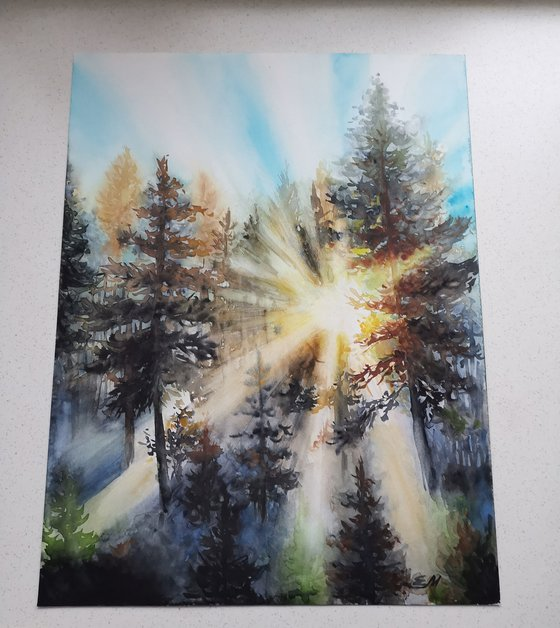 Sun in the forest
