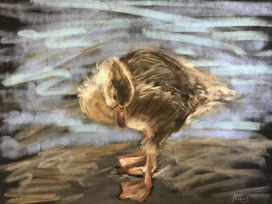 My Feet (Gosling)