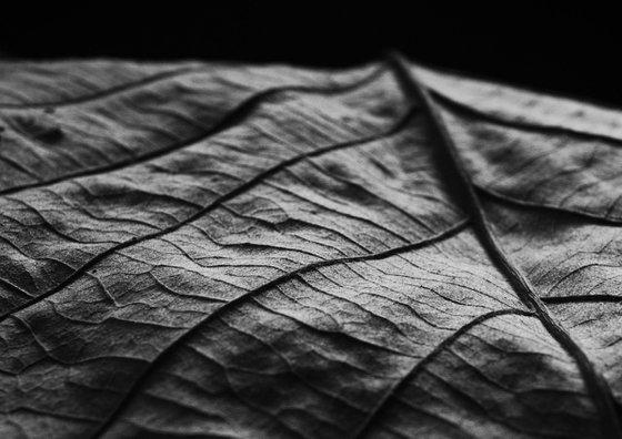 Leaf Veins VI [Unframed; also available framed]