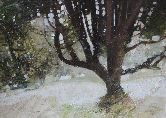 My Favourite Tree, Manor Gardens, Eastbourne