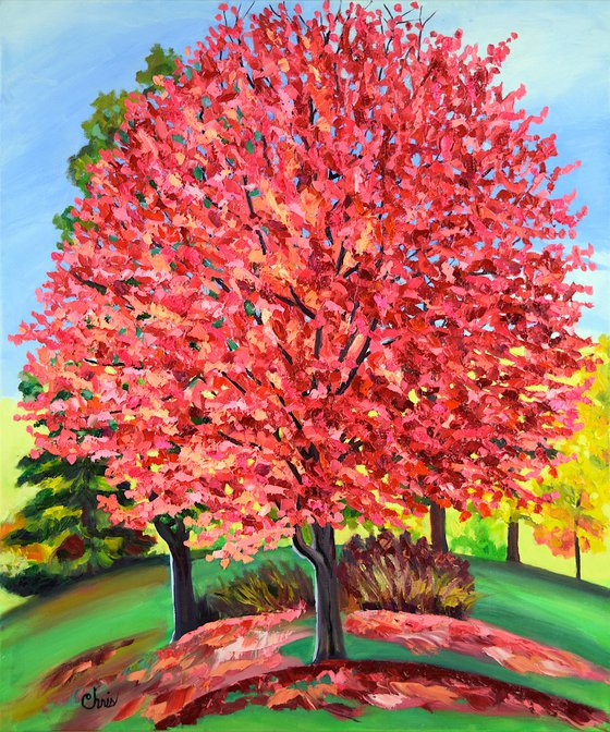 Pink & Red Maple Tree