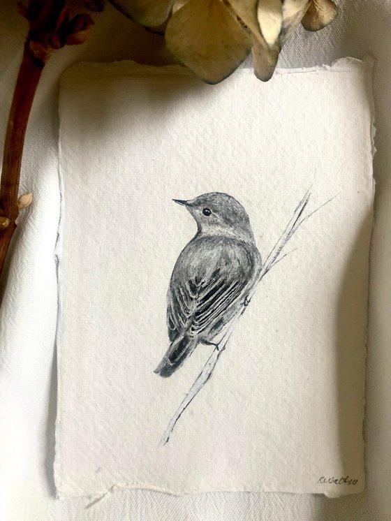 Reed Warbler, Small Bird Portrait (A6)