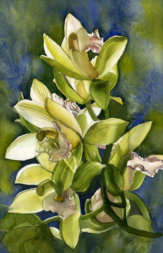 winter cymbidium orchid watercolor floral