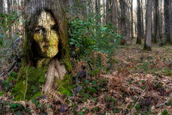 The hidden beings of the forest