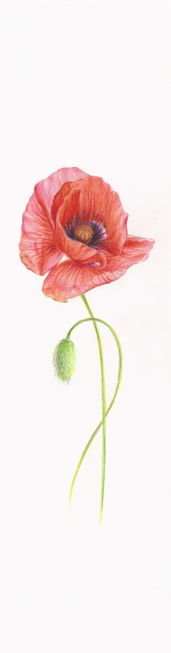 Poppy - from my Wildflowers Bookmarks Collection